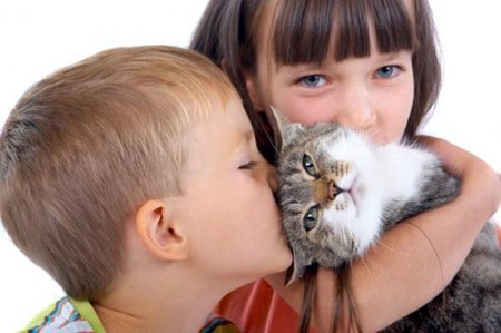 Аллергия на кошек у детей: симптомы и лечение аллергии на шерсть кошек у детей