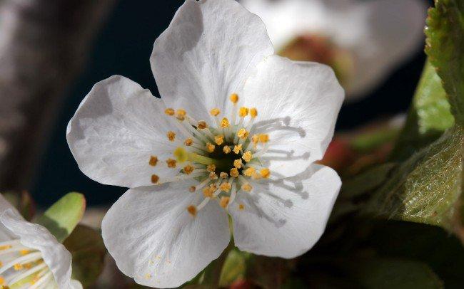 Первое мая - Праздник весны и труда