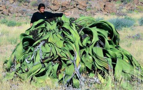 Интересные факты о пустыне Намиб