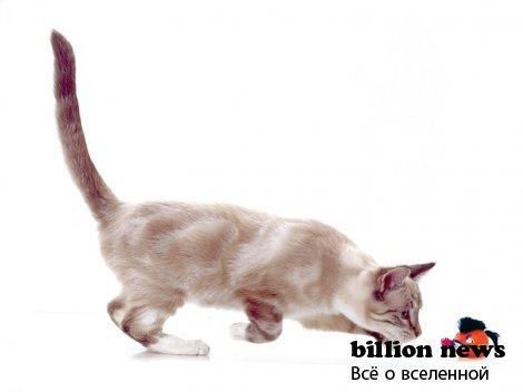 Самые нелепые законы о кошках
