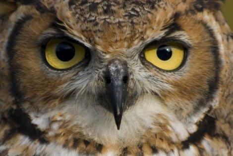 Интересные факты о животных (10 фото)
