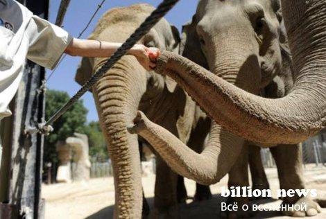 Жар а и обитатели зоопарков (25 фото)