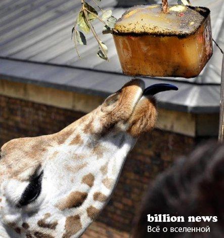 Жара и обитатели зоопарков (25 фото)