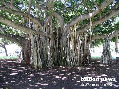 Самые интересные факты о деревьях