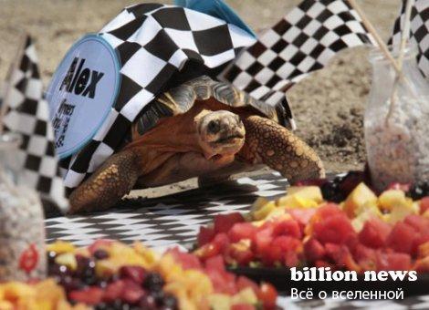Самые медленные гонки в мире (видео)