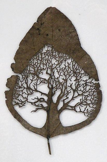 Резьба по листьям. Leaf Art от испанского художника Лоренцо Дюрана (Lorenzo Duran) (21 фото)