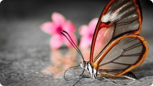 Самые необычные бабочки в мире (7 фото)