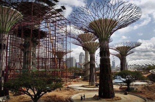 50 метровые искусственные деревья в Сингапуре (5 фото)