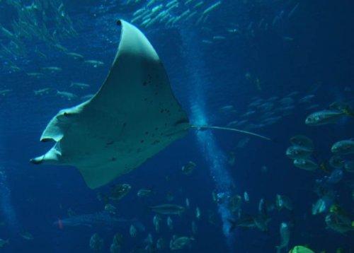 Самый большой аквариум в мире (25 фото)