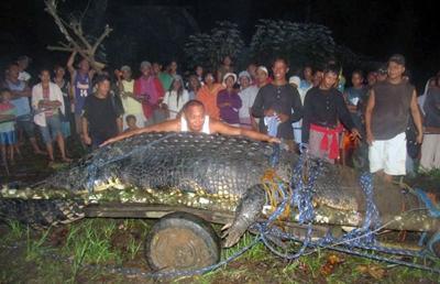 Самый большой крокодил в мире (7 фото)