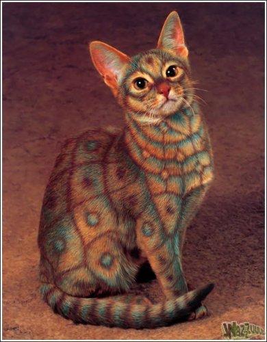 Новая мода - разноцветные коты (46 фото)