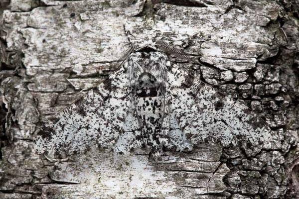Камуфляж дикой природы (25 фото)