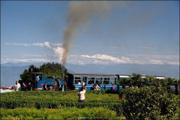 Узкоколейка с действующими паровозами в Гималайских горах (13 фото)