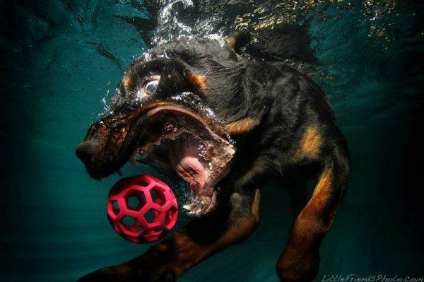 Фотографии собак под водой от Сети Кастила (12 фото)