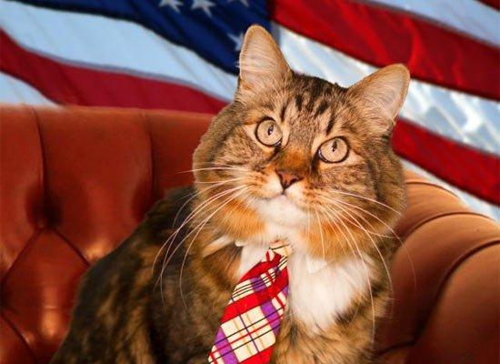 Кот Хэнк претендует на место американского сенатора (2 фото)