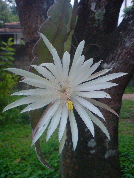 10 Редчайших цветов на Земле (10 фото)