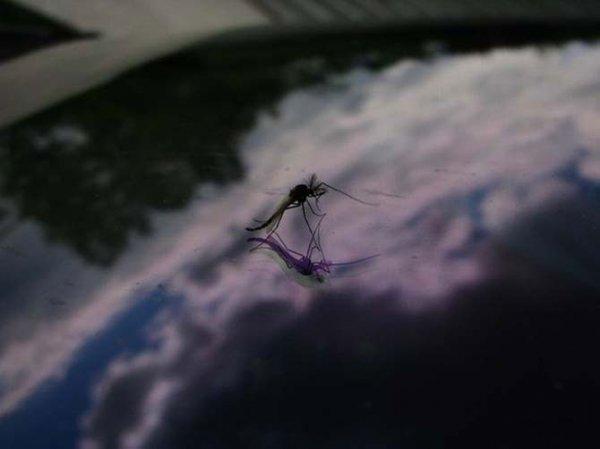 Нашествие комаров на деревню в Беларуси