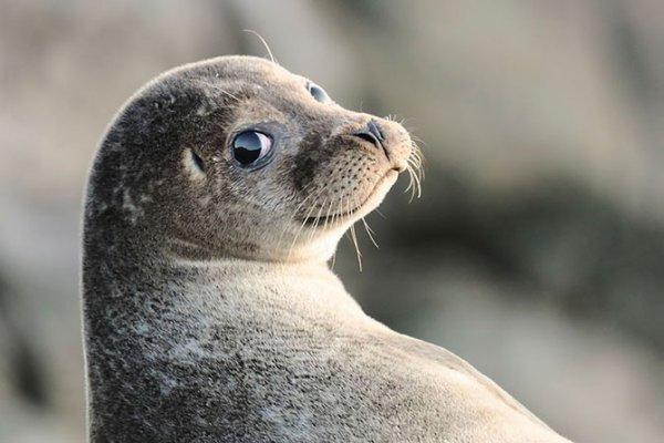 Победители конкурса The British Wildlife Photography Awards 2012 (29 фото)