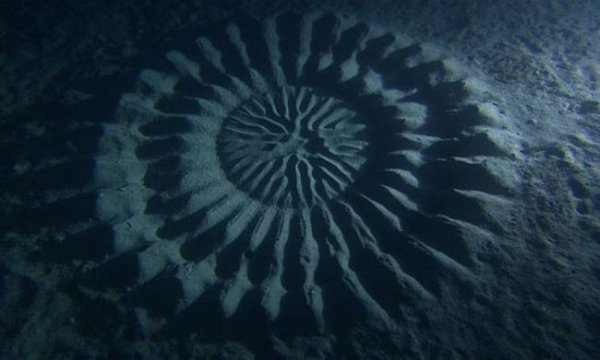 Загадочные круги на дне океана вблизи Японии (4 фото)