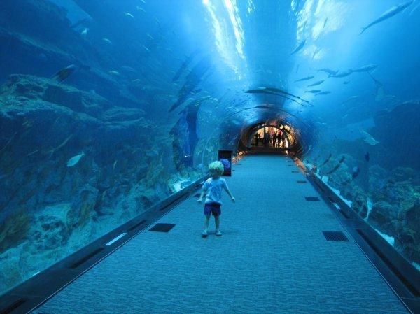 Самый большой в мире крытый аквариум (19 фото)