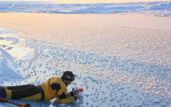 Ледяные цветы из Арктики (5 фото)