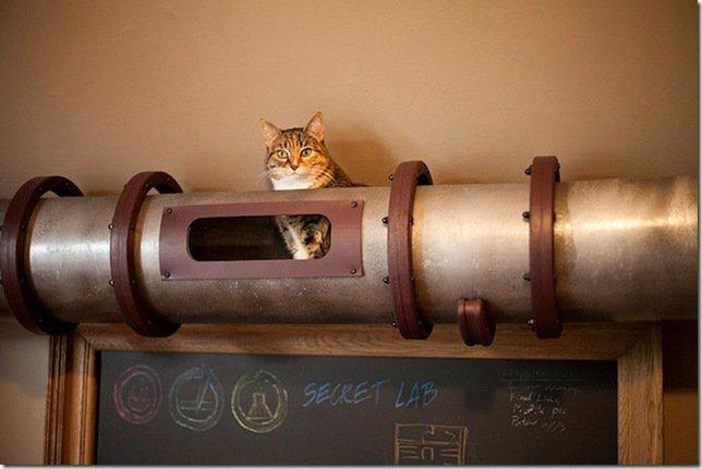 Кошачья транзитная система (9 фото)