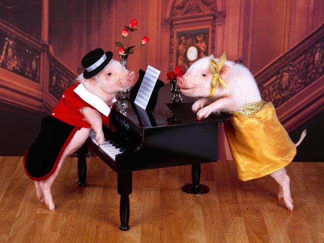 Евросоюз требует, чтобы у свиней были игрушки