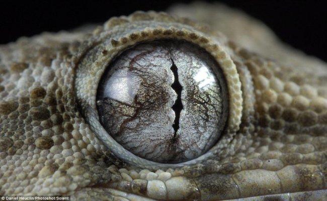Глаза ящериц и лягушек (8 фото)