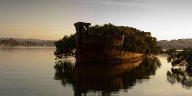 Плавающий лес у берегов Сиднея (5 фото)
