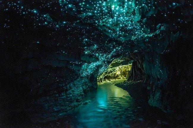 Пещеры Светлячков в Новой Зеландии (5 фото)