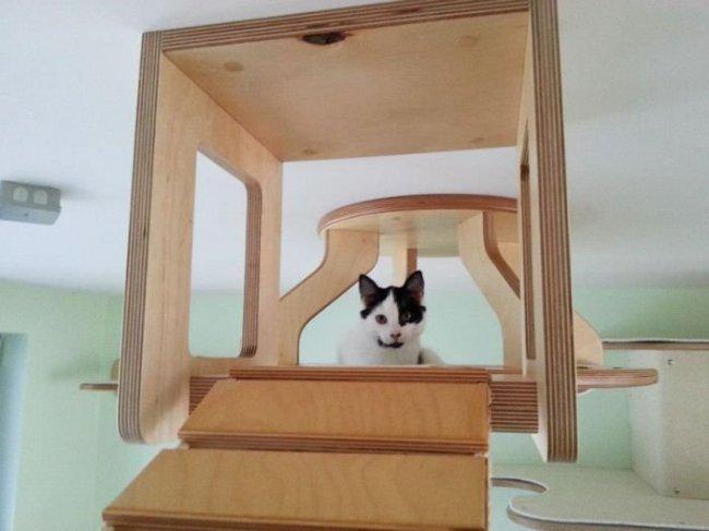 Удивительная комната для кошек (10 фото)