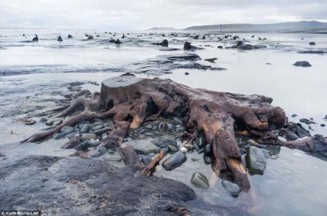 В Великобритании обнаружен лес возрастом в 5 000 лет (8 фото)