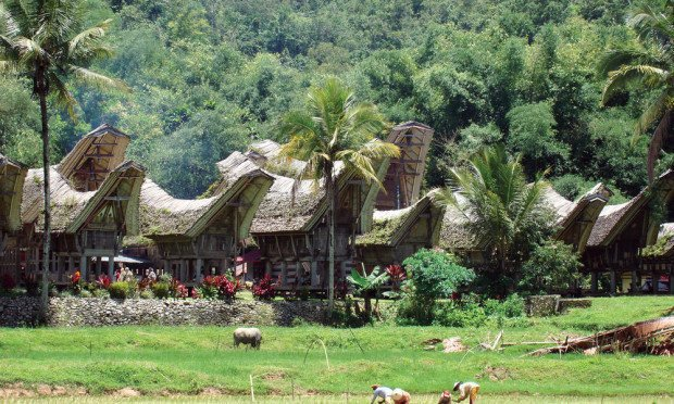 В Индонезии есть обычай раз в несколько лет доставать трупы из гробов, чтобы помыть и переодеть (5 фото)