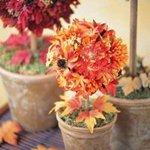 Как избавиться от мошек в цветах — средства против комнатных мошек