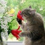 Глистогонное Дронтал для кошек: применение, дозировки и отзывы