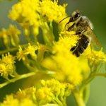Сад без аллергии на пыльцу