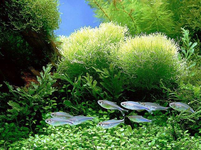Как выполняется чистка аквариума?