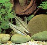Какие приборы нужны для аквариума?
