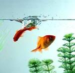 Дополнительный инвентарь для аквариума