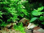 Выбор растений для аквариума