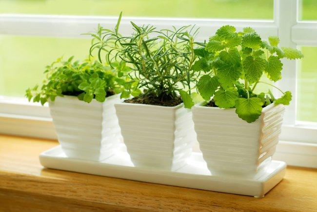 Болезни комнатных растений: вирусные заболевания