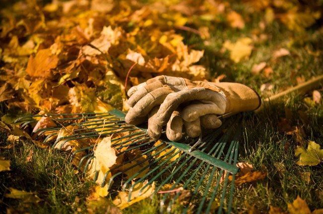 Лунный календарь на октябрь 2012 для садоводов и огородников