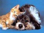 Кошки и собаки. Как ужиться двум давним соперникам?