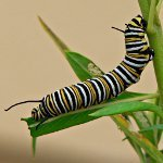 Как бороться с гусеницами