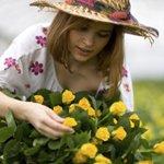 Как правильно сажать розы: фото и видео
