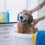 Шампунь для собак: как выбрать?