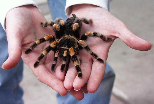 Боязнь пауков: избавляемся от фобии