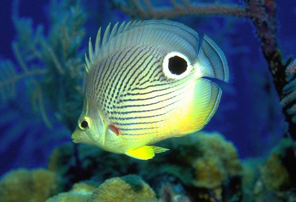 Как узнать, здорова ли аквариумная рыбка?