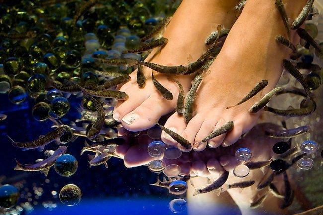 Ихтиомассаж: педикюр рыбками