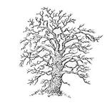 Генеалогия, история семьи. Ревизские сказки